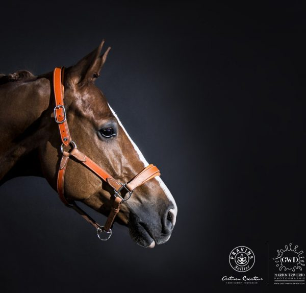 High quality halter and rein